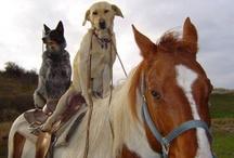 Tiere / Animals / Fremde Tierfotos / Foreign Animal Photos - Besuche meine Seiten http://katzentipps24.de und http://hunde-tipps24.de/