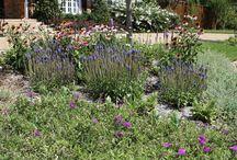 Garden!!! / by Pinkie Lee