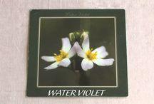 Fleur de bach WATER VIOLET numéro 34 / Fleur de bach WATER VIOLET numéro 34 Plus d'information sur cet élixir :http://elixirs-bach.com/liste-elixirs-bach/noms-numeros/38-willow.html