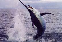 Sportfishing Photography