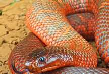 змеи, рептилии, пресмыкающиеся и т.д.
