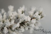 CGP Decor: Canadian Seasons / Photography featuring different seasons in Canada