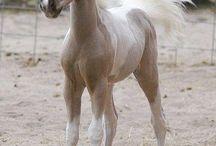 caballos y más