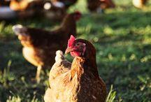 Ethical Farming