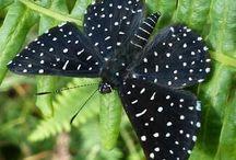 sommerfugle i alle farver