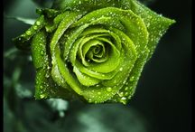 All things green / by Donna Yacino