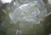 Aloe Vera is an Adaptogen / Click image to learn what and Adaptogen is and how it helps the body fight stress.
