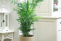 Housplants