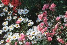Ogród -róże-uprawa