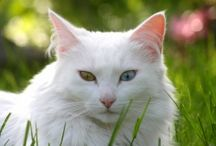 Cat Wallpapers / Latest High Definition HD Quality desktop wallpapers for your HD & Widescreen monitor resolutions for FREE!