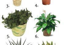 Växter som renar rum