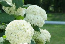 witte tuin planten