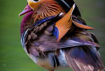 [BIRDS] / Birds are beautiful! The colours are amazing...