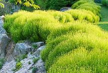 Beautiful Drought-Tolerant Plants