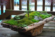 My moss garden dream