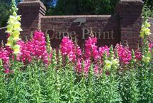Flowers / flowers used in gated community entrances