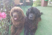 Negra i Leo