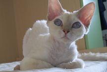 Gatti / Non c'è niente di piu' bello di un gatto che fa le fusa sdraiato sulla tua pancia