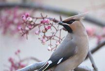 Birds / by Anitha Karnam