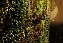 Verticaal tuinieren binnen