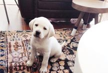 Puppies and Rugs! / Because PUPPIES! And because they love rugs too!