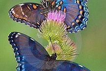 Butterflies / by Mary Ellen Lampman