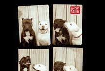 Animal Photobooth Moments