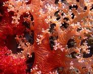 Korallit