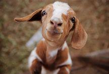 Just so cute