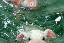 Piggies, peace, love, and muddy hooves... / Pigs / by Kathy Baldwin