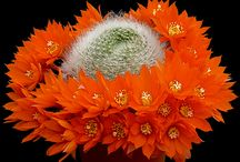 Cactus Happiness