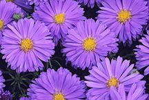 All things purple......