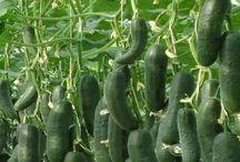 Új termesztési módszerek