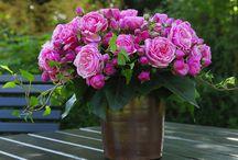 Beautiful Blooms / Fancy flowers