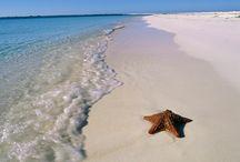 Florida here I come / by Stephonie Bradham