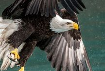 Vultures ~ Eagles ~ Owls ~ Hawks ~ Kestrel ~·`·~ those ones! /  The  BIG Birds of PREY ~~~  <|》¡€  G R ¤¤T <  R O O F V♡ ë|_ s  (Jagters)