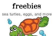 Homeschool Science: Turtles