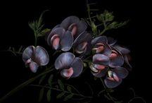 Botanical Photography - My Work