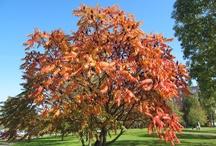 Csodás természet - Nature / Földünk csodálatos természeti szépségei Továbbiak itt: http://balkonada.cafeblog.hu/kategoria/viragos-tippek/csodas-termeszet/