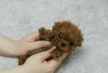 Cute puppy / căței drăgălaș