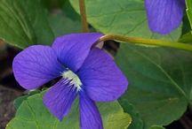wild violett tattoo