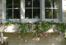 FIBERGLASS WINDOW BOXES / OUR DIFFERENT FLOWERS