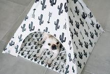 casitas iglu gatos y perros