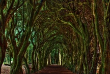 Tree Lore