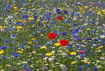Meadows / Beautiful meadows.