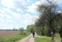Szlak rowerowy Ernsta Wiecherta / Jest to propozycja szlaku rowerowego prowadzącego z Mrągowa do Piecek i wracającego do Mrągowa. Długość szlaku to około 45 km.