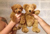 Doggies & puppies