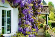 """garden / by """"Lala"""" Coralia DeFreitas"""