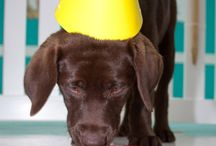 Birthday Parties / Dog themed parties and cakes for your pooches big day.