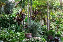 My home - garden